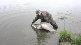ловля сома на реках калининграда