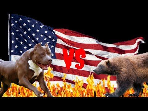 Dog VS Wolverine Far Cry 5