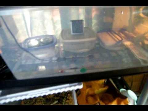 update on my bearded dragon eggs and my homemade incubator.