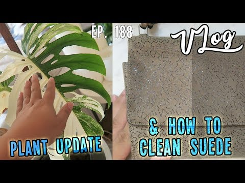 PLANT UPDATE & HOW TO CLEAN SUEDE   VLOG EP. 188