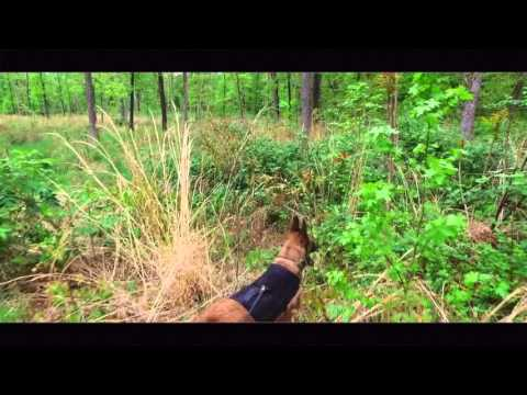 Malinois on 2nd Lesson of Tracking: Dog Tracking Virginia   Search and Rescue Dog Trainers