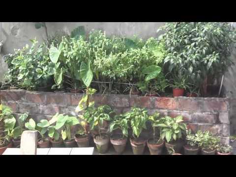 Bamboo Big Roof | Bamboo Roof for Climbing Vines | Gardening Updates | Gardening Tips (Urdu/hindi)