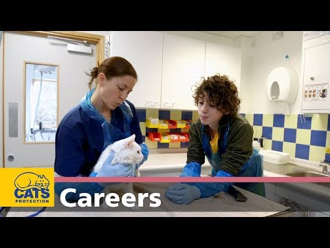 Meet a Neutering Officer and Vet Nurse – Careers with cats, episode three