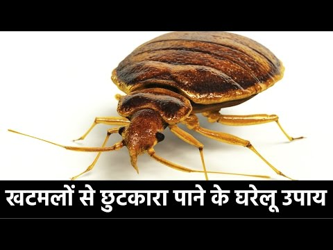 How To Get Rid Of Bed Bugs