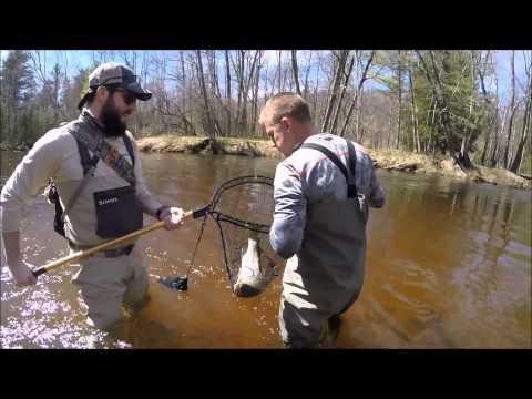 Steelhead Fishing in Michigan