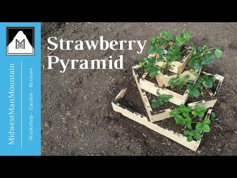 Vertical Gardening - Strawberry Pyramid