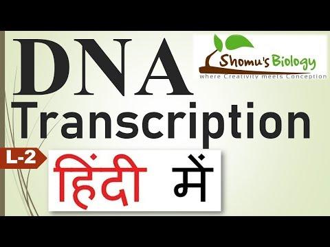 DNA transcription in Hindi