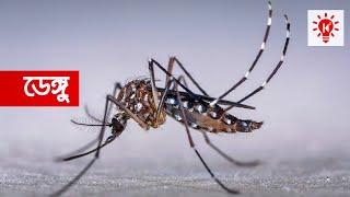 ডেঙ্গু জ্বর | কি কেন কিভাবে | Dengue Fever | Ki Keno Kivabe