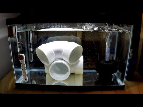 buying saltwater fish - how to setup a quarantine tank - rotter tube reef