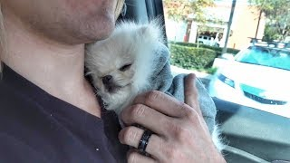 Taking our new puppy to the hospital.. (Stranger drops him on his back)