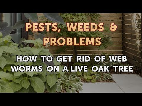 How to Get Rid of Web Worms on a Live Oak Tree