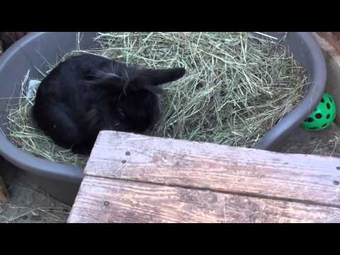 Gut Stasis in rabbits, the signs