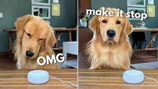 My Dog Reacts to Alexa