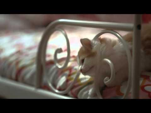 IKEA Wembley Cats on Vimeo