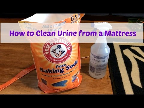 How to Clean Urine From a Mattress
