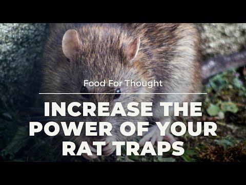 Add killing power to rat trap.