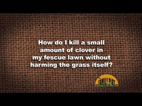 Q&A How to control clover in a lawn