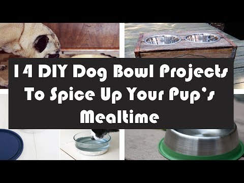 14 DIY Dog Bowl Projects To Spice Up Your Pup's Mealtime