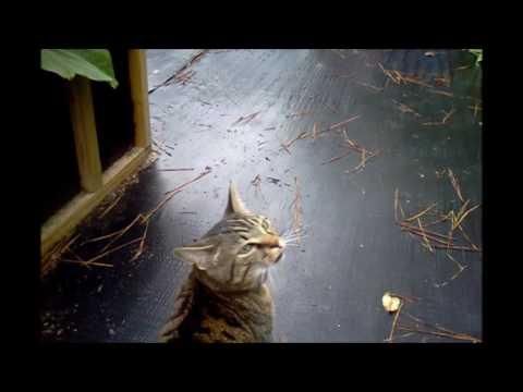 Greenhouse and Garden update 6-22-17