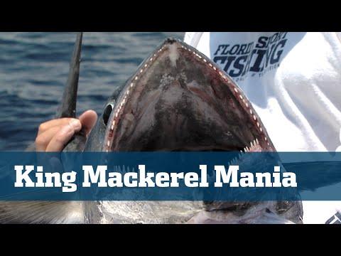 Kingfish South Florida Tips Tactics Baits Rigs - Florida Sport Fishing TV