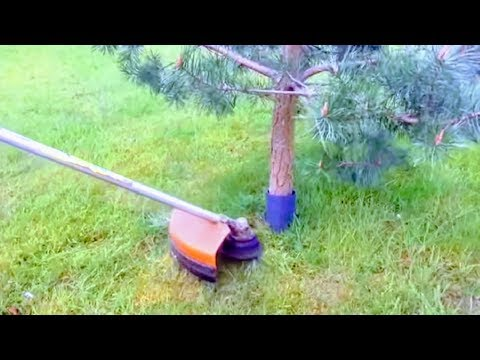 HOW TO CUT GRASS AROUND TREES WITHOUT HITTING BARK | BRUSH CUTTER,LAWN MOWER,EDGE TRIMMER PROTECTION
