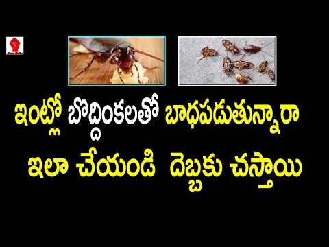 Avoid Cockroach with Cucumber | ఇంటిలో బొద్దింకలు లేకుండా చేయటం ఎలా - Trend Setter