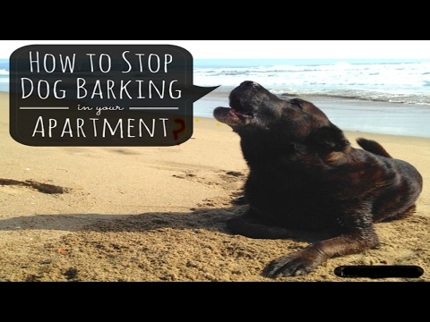 How to Stop a Dog Barking | How to Stop a Dog Barking at Night