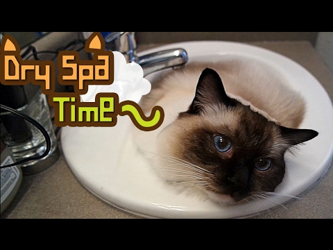 Dry Spa Time (Cat in the sink)