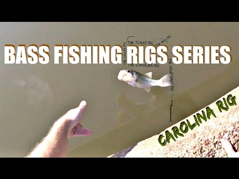 The Carolina Rig - Bass Fishing Rigs Series