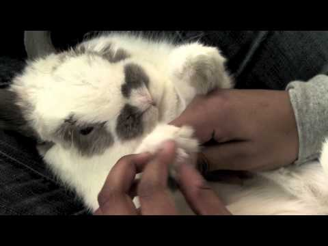 Cut your bunny's nails the right way!