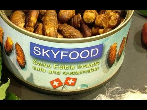 Welcome to the SKYFOOD channel about EDIBLE INSECTS