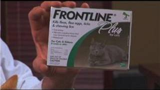 Cat Care Health How To Get Rid Of Fleas On Cats