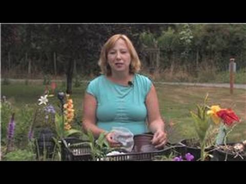 Flower Bulbs : How to Store Calla Lily Bulbs