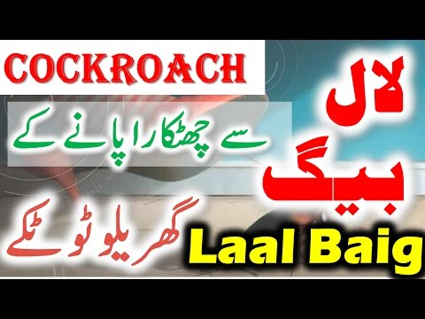 How To Get Rid Of Cockroaches Forever || Get Rid Of Roaches || Cockroach Killer | Urdu \ Hindi