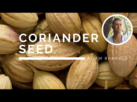 Coriander - The Oil of the Impeccable Integrity