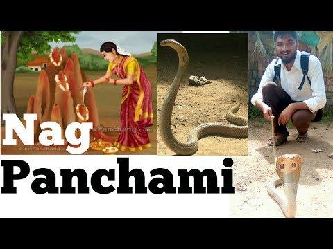 Rescued the Snake from Damaput village , Jeypore ( Koraput )