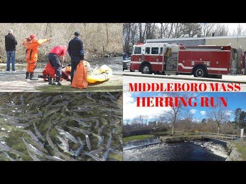 Oliver Mill Park ~ Herring Run 2018 ~ Middleboro Firemen in Nemasket River