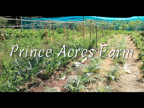 Prince Acres Farm in Lantzville with a holistic nutritionist approach