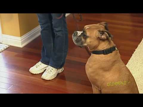 How to Teach Your Dog to Greet Houseguests For Dummies
