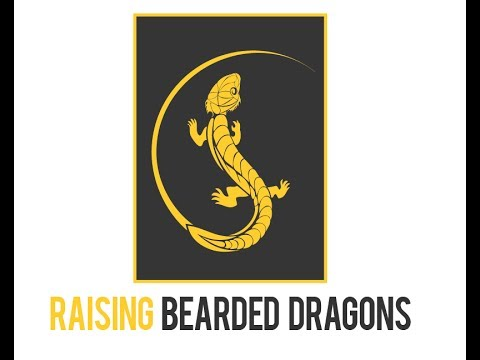 Raising Bearded Dragons 1st Unofficial FaceBook Giveaway