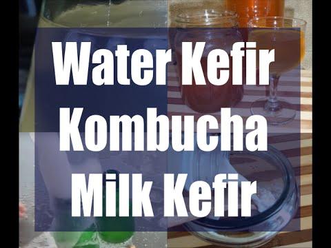 Milk kefir, Water kefir & Kombucha