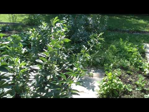 Gartenrundgang Juli 2014