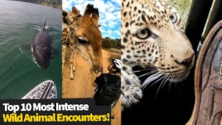 Top 10 Most Intense Wild Animal Encounters