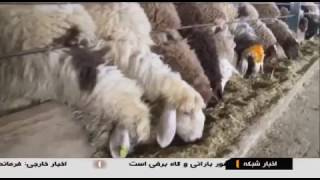 Iran made largest agriculture project, Lorestan Agroindustrial complex مجتمع كشت و صنعت لرستان ايران