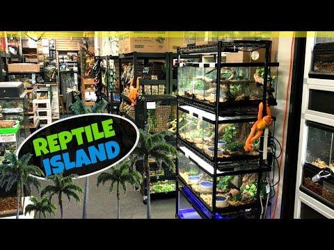 REPTILE ISLAND TOUR