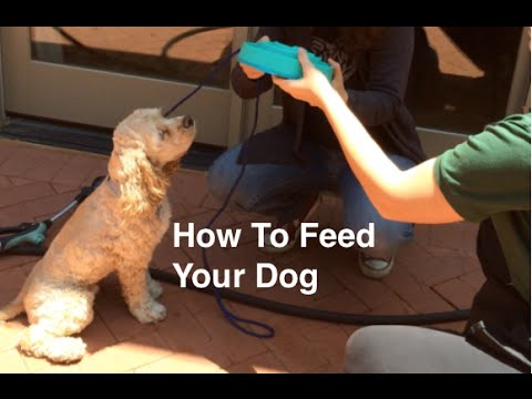 How to feed your dog, over excitement and resource guarding basics