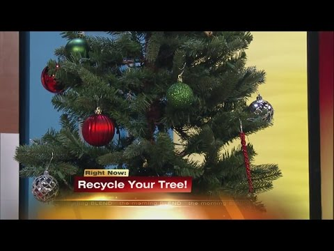 Christmas Tree Recycling 1/4/16