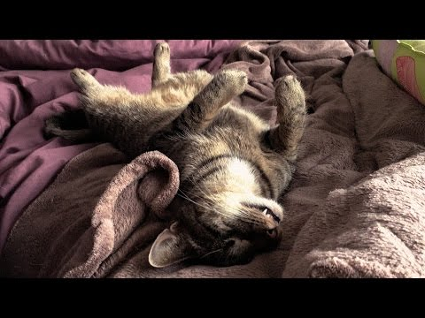 A Day in the Life of Bamboo the Blind Cat