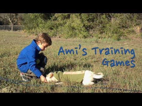 Kids and Dogs: Games to Train Dogs to Come When Called