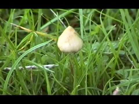 Manna - psilocybin mushroom inspired documentary - by Simon G. Powell